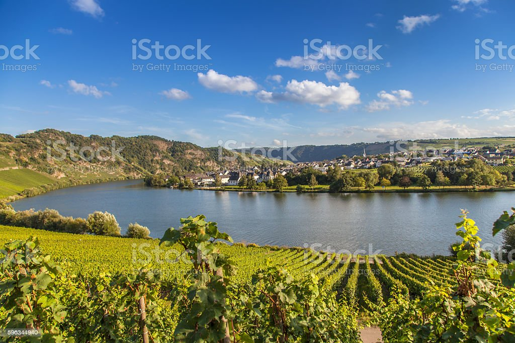 view on Moselle and vineyards  in Germany Piesport stock photo