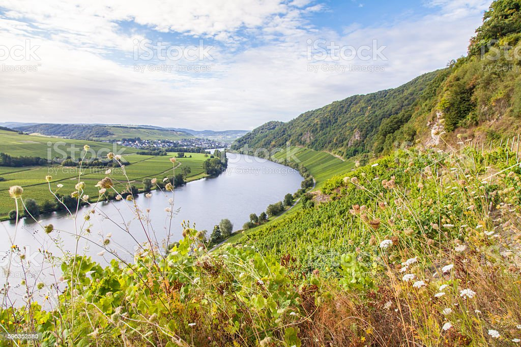 view on Moselle and vineyards  in Germany Piesport royalty-free stock photo