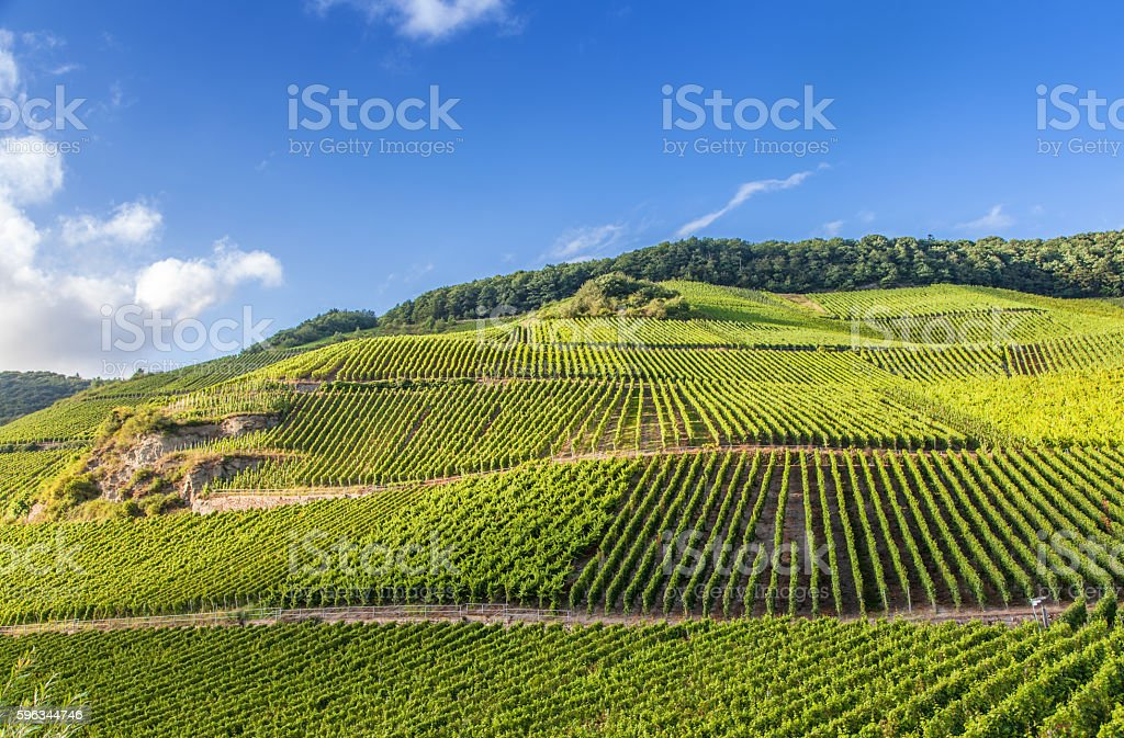 view on Moselle vineyards  in Germany Piesport Lizenzfreies stock-foto