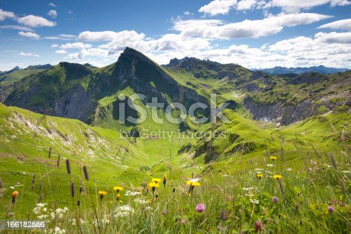blooming summer meadows in front of  mt. rote spitze, tannheimer berge, tirol, austria
