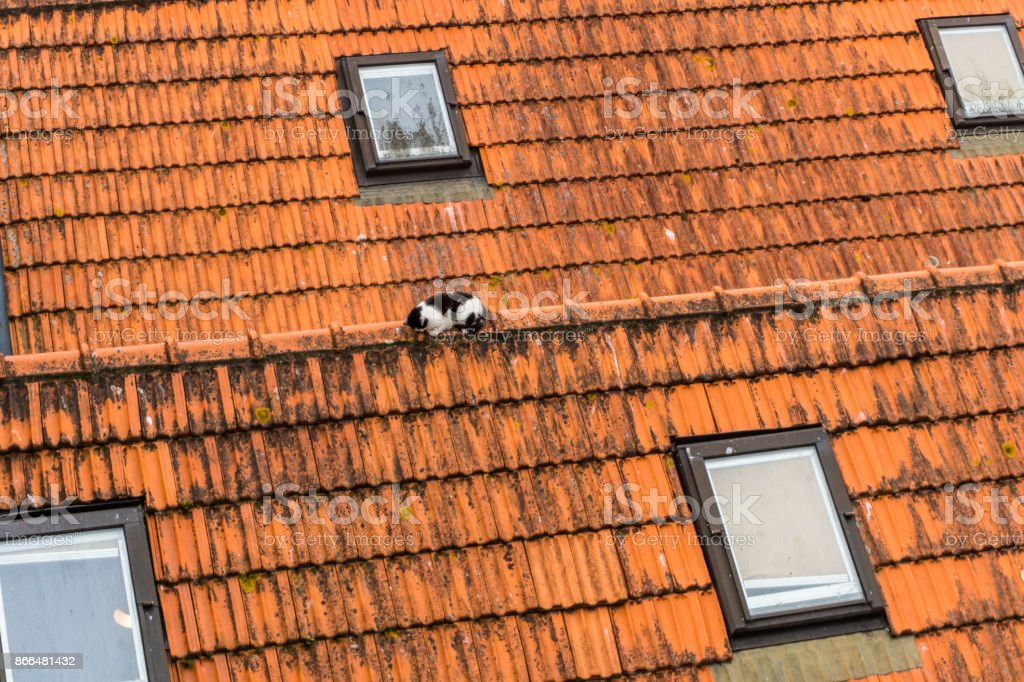 View on roof houses and sleep cat on Vila Nova de Gaia on Douro river in Porto, Portugal. stock photo