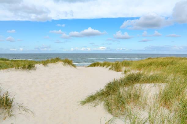 Ver os na bela paisagem com praia e dunas de areia no mar do Norte, Jutlândia Dinamarca - foto de acervo