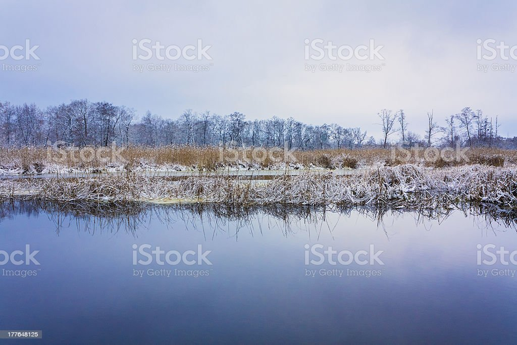 View On The Bog. Grass And Water. royalty-free stock photo