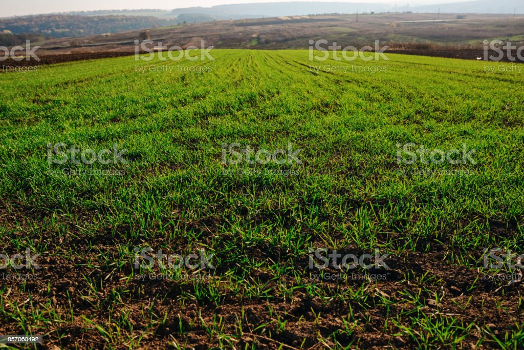 View on the farm cornfield with green grass and soil in countryside with autumn hills on background stock photo