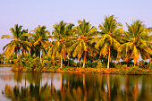 view on the lush coconut palm trees near to a backwater lake,beautiful tropical place natural landscape background, kerala india
