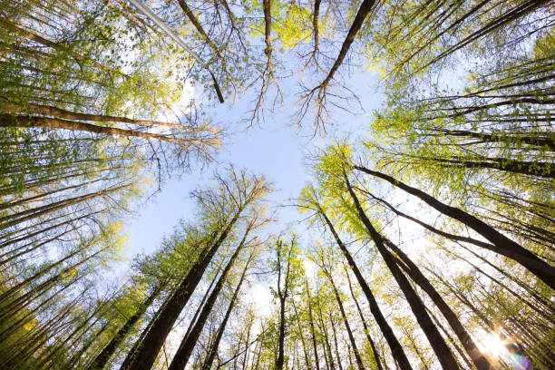 view on the sky from forest - forest bathing foto e immagini stock