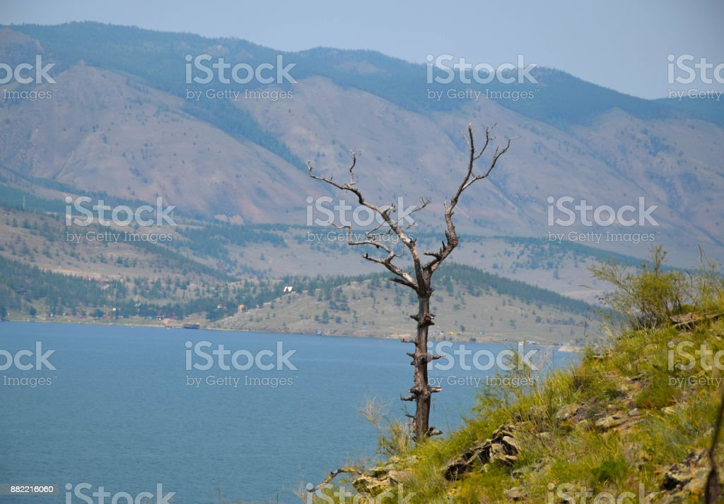 View on Tree, Mountain and Baikal Lake, Siberia. Summer stock photo