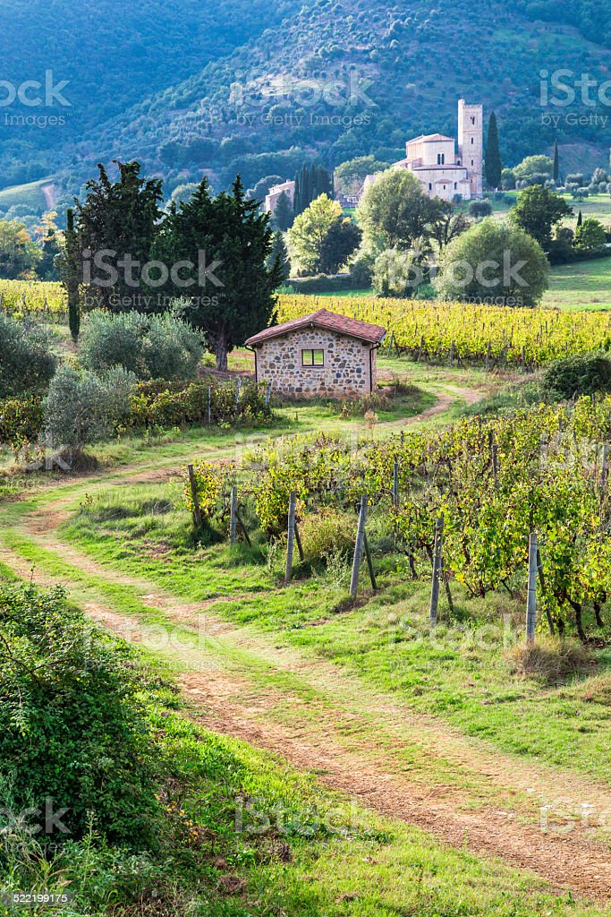 View on vineyards in Tuscany at sunset stock photo