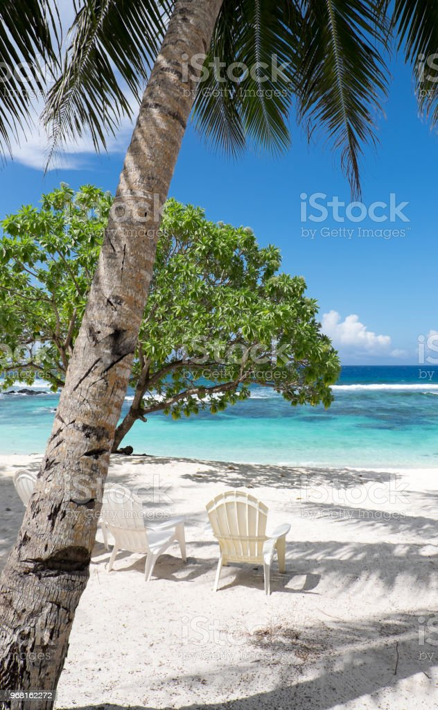 View Onto A White Sand Beach With Trees Shade And Chairs For - Palm-tree-furniture-from-pacific-green