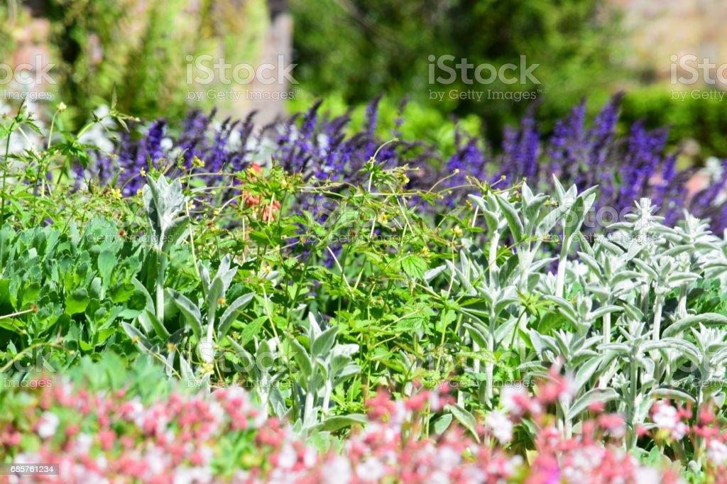 Visa över en blomsterrabatt, naturliga bakgrundsbild royaltyfri bildbanksbilder