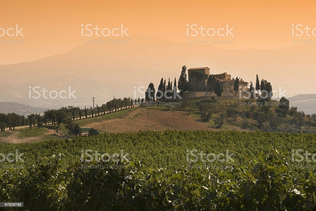 View over avineyard in Tuscany royalty-free stock photo