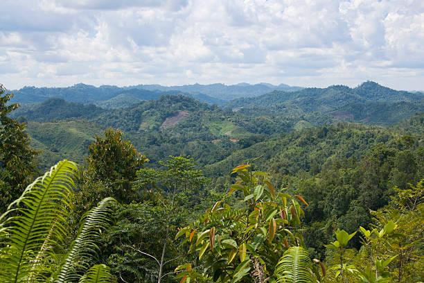 View over jungle in Borneo, Malaysia