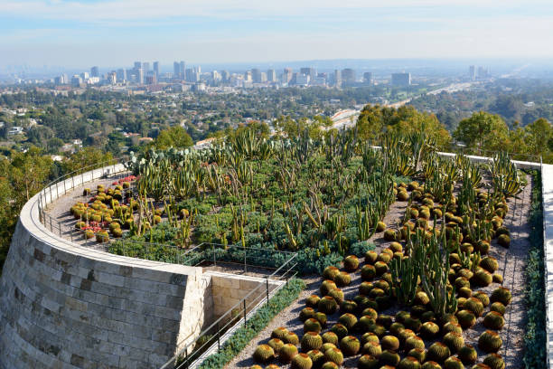 View over the Cactus Garden of the Getty Center in Los Angeles. Los Angeles, California, United States of America - December 3, 2017. View over the Cactus Garden of the Getty Center with view of Los Angeles in the background. westwood neighborhood los angeles stock pictures, royalty-free photos & images
