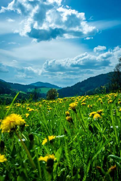 Blick über die Wiesen mit Blumen im Vordergrund – Foto