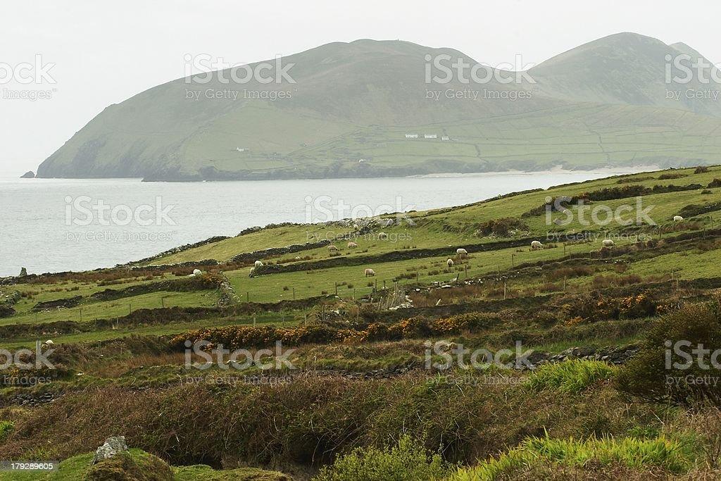 View Over the Irish Blasket Island royalty-free stock photo