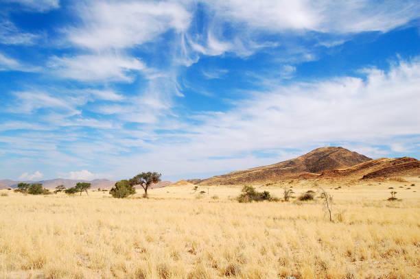 blick über die savanne in namibia - afrikanische steppe dürre stock-fotos und bilder