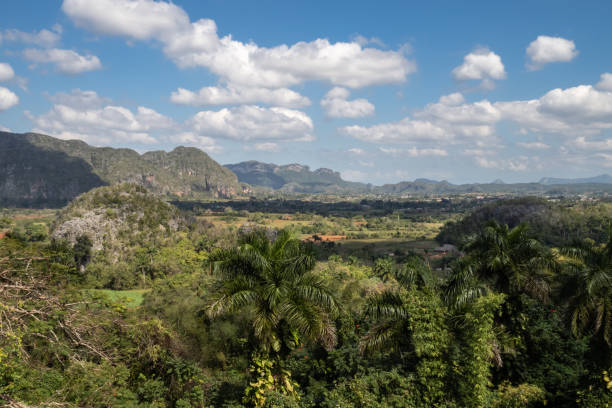 View over the tobacco fields of Vinales, Cuba stock photo