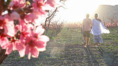 istock View past blossoms to mature couple exploring orchard 1314847578