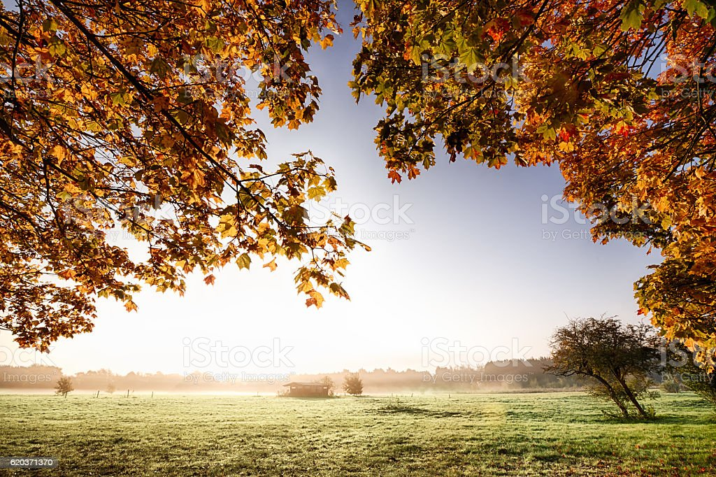 View though autumn leaves to sunrise foto de stock royalty-free