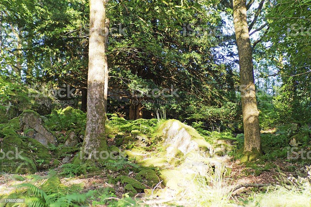 View through a Lake District wood. royalty-free stock photo