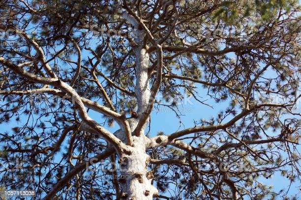 Photo of View through a treetop in the blue sky
