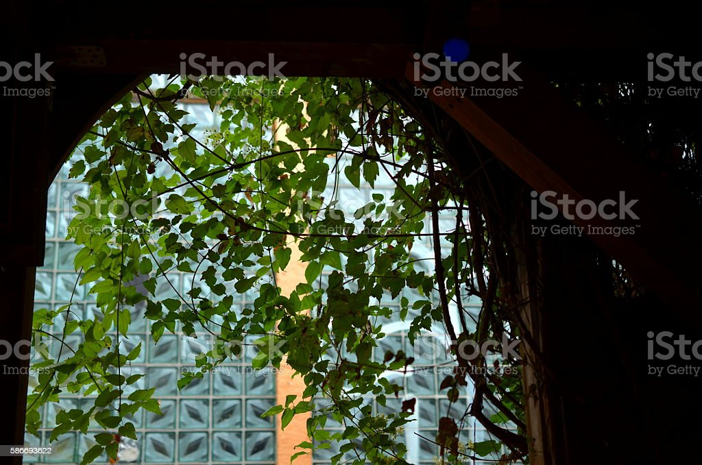 view through a window with green hanging plants stock photo