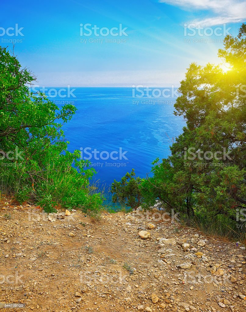 View through branches on the sea stock photo