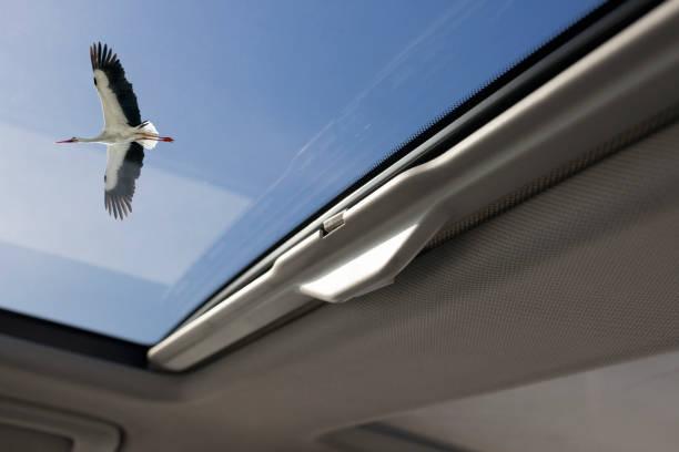 Blick durch Sonnendachauto mit Storchfliegen – Foto