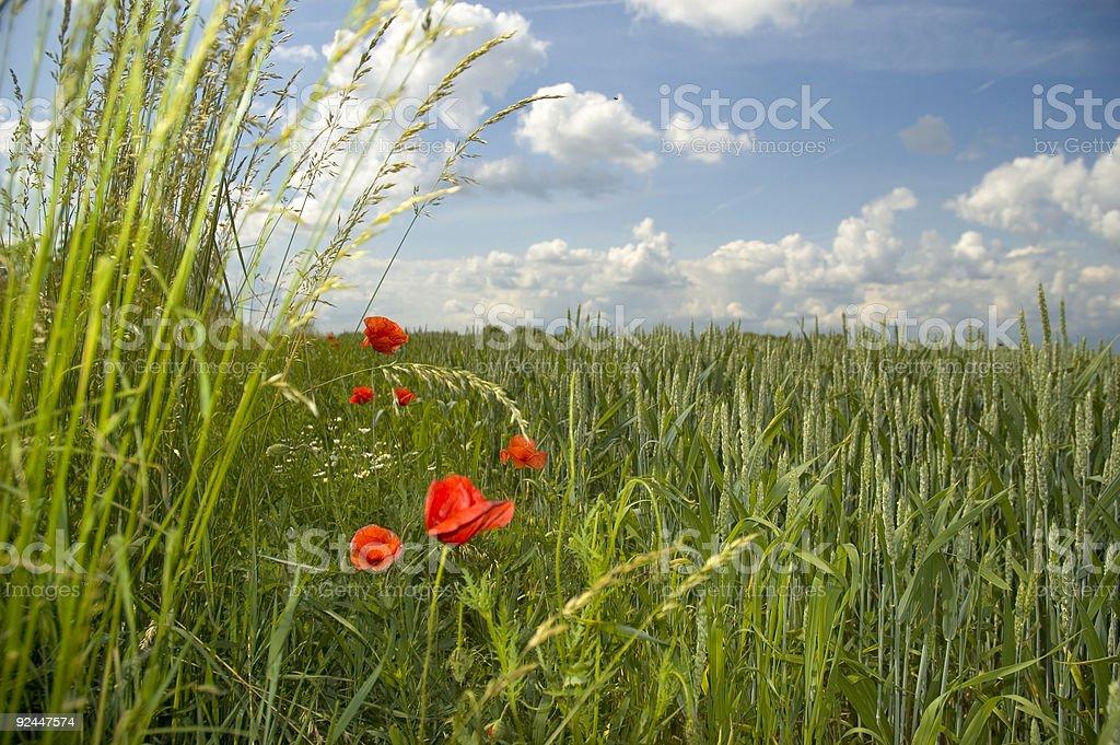 View through the grass stock photo