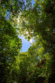 View through the green leaves and trees of the jungle into the blue sky. Puerto Plata, Dominican Republic