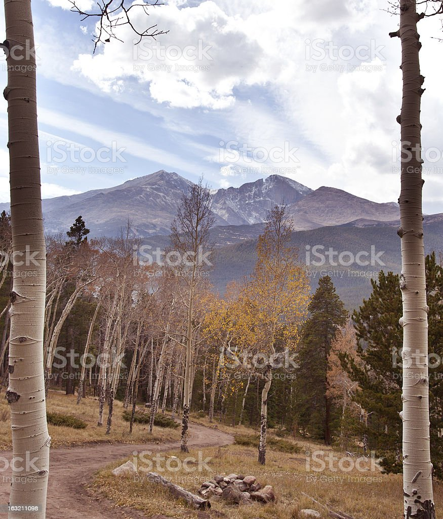 View Through the Trees royalty-free stock photo