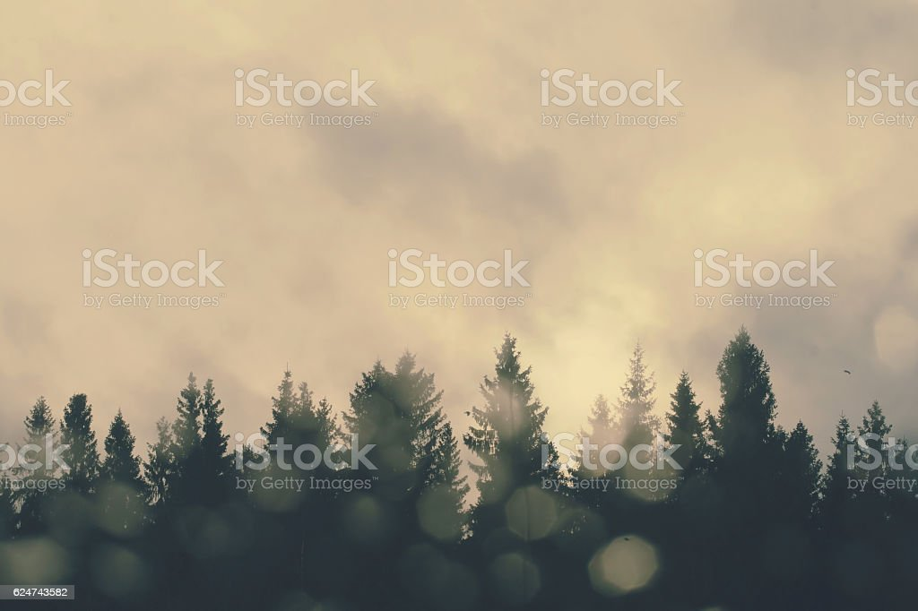 View through the window on the treetops. stock photo