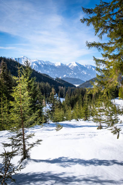 View thruogh forest on plateau Kaiserau to mountain Rottenmanner Tauern – Foto
