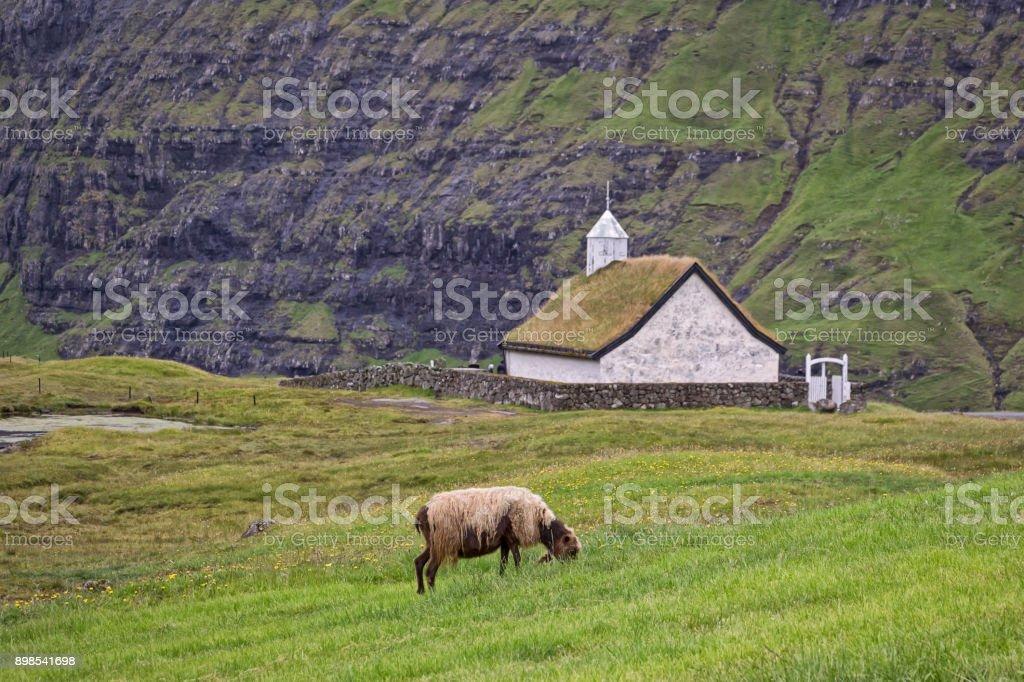 Ausblick auf ein Schaf und eine kleine Kirche im traditionellen ländlichen Stil. Typisch für den Färöer Inseln und in Skandinavien – Foto