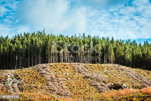 View to cut down place in pine forest, Norway