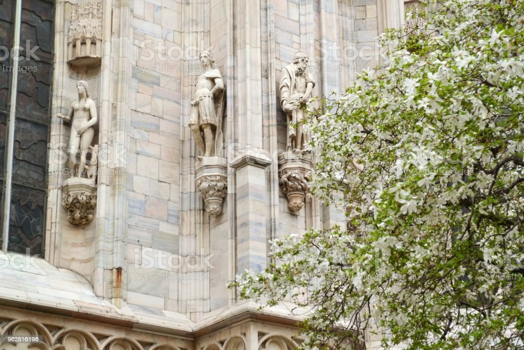 View to Milan Duomo facade sculptures and blossoming magnolia tree. - Royalty-free Ancient Stock Photo