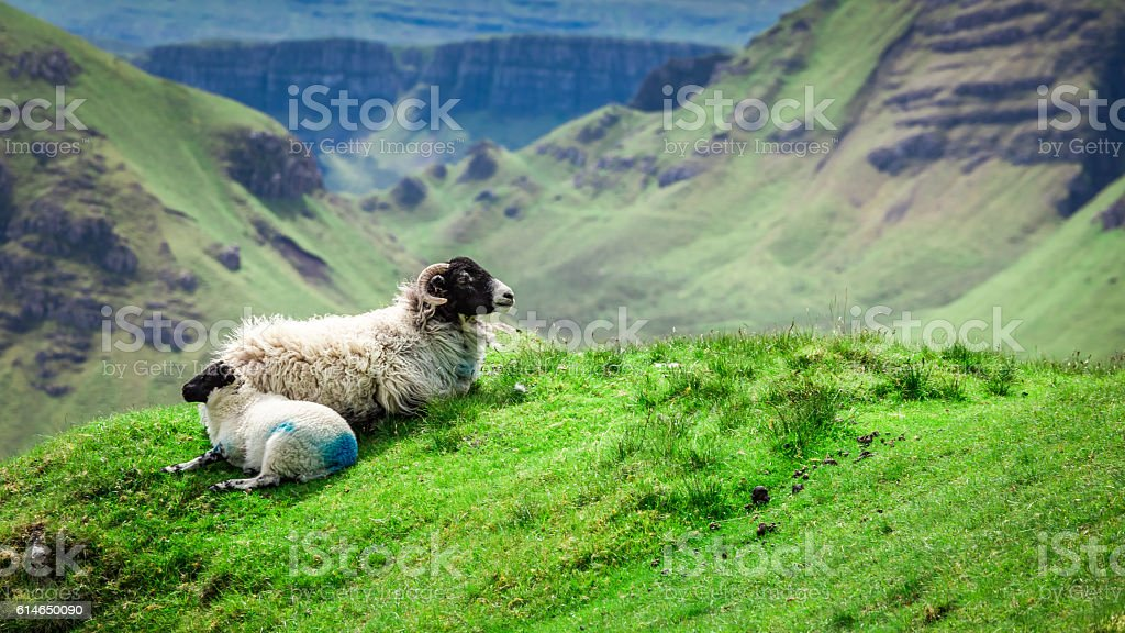 View to sheeps in Quiraing, Isle of Skye, Scotland stock photo