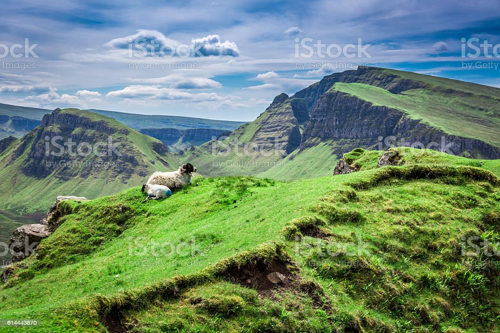 View to sheeps in Quiraing, Scotland, United Kingdom stock photo