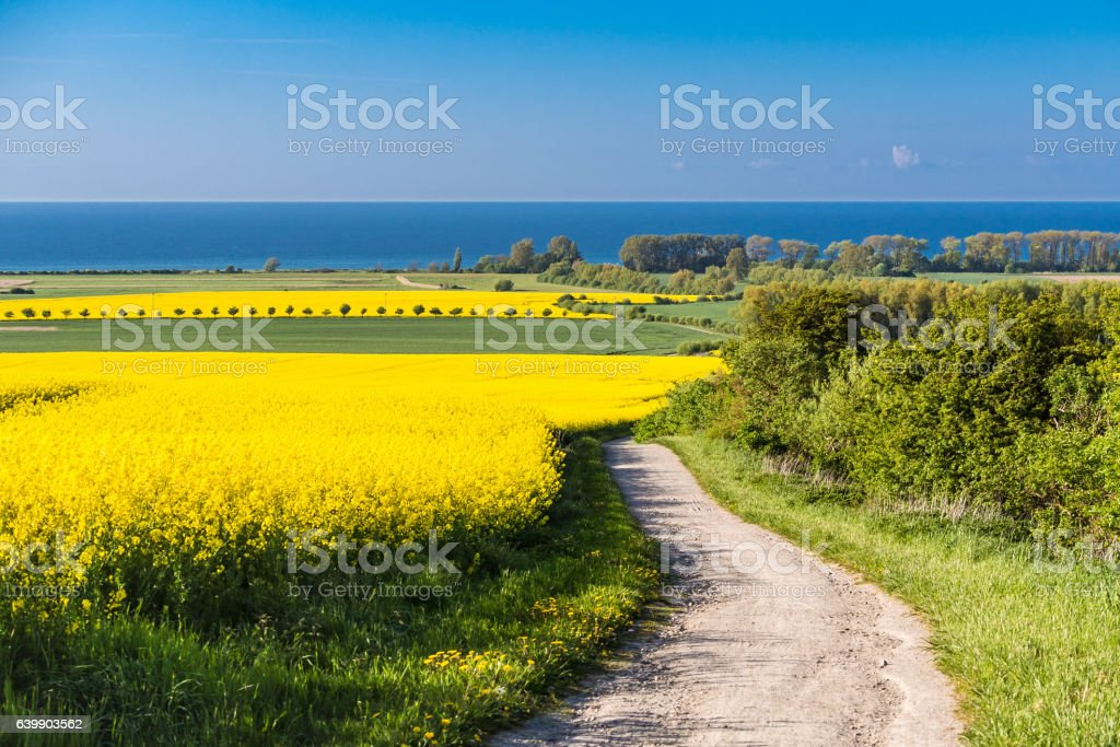Blick auf die Ostsee mit canola field  – Foto
