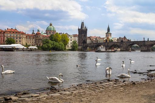View to the Charles Bridge and St. Nikolaus Church in Prague