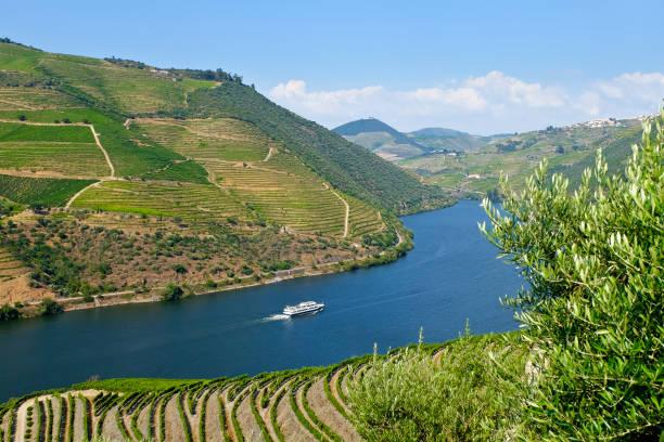 view to the famous douro valley in portugal. - douro imagens e fotografias de stock