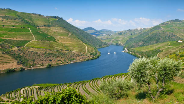 view to the famous douro valley in portugal. the alto douro wine region is the oldest wine-growing region in the world and has been a unesco world heritage site since 2001. - douro imagens e fotografias de stock