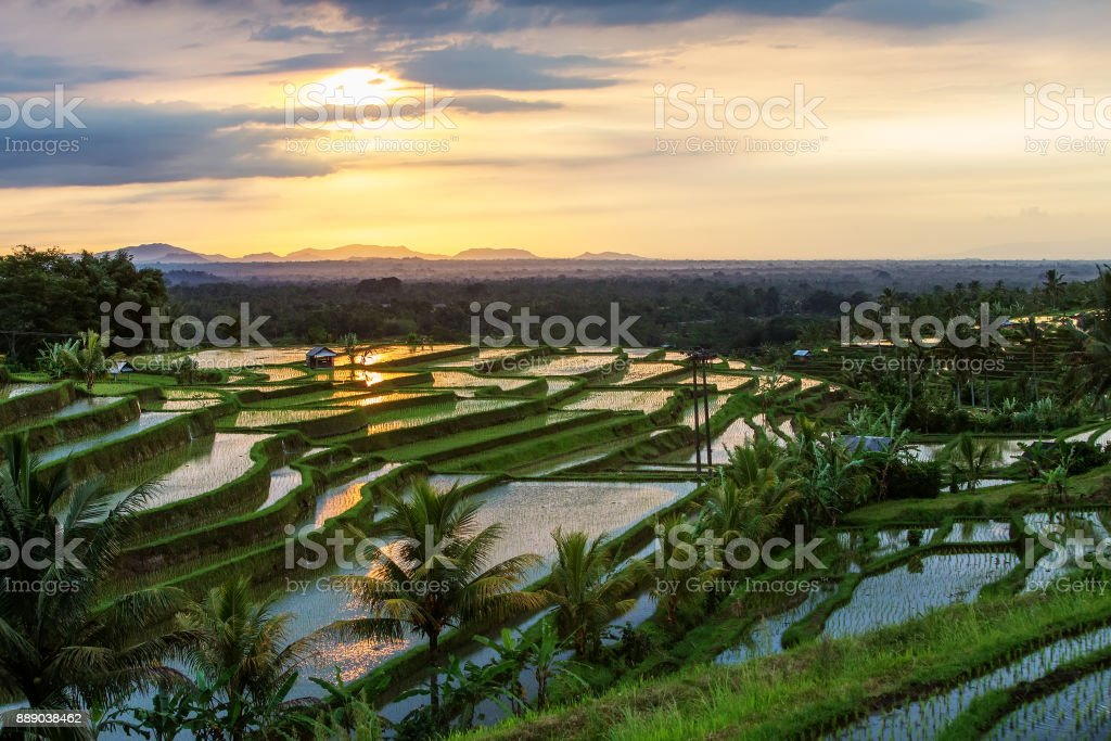 View to the Jatiluwih rice terraces at sunrise on Bali island, Indonesia stock photo