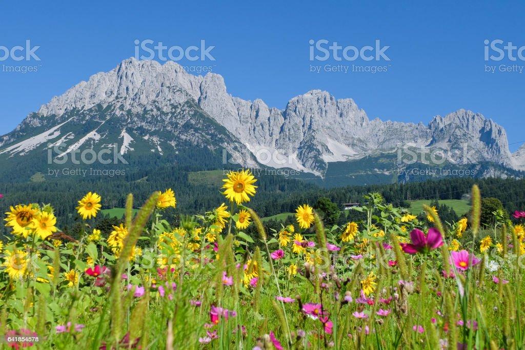 View to the mountain range Wilder Kaiser, Tirol stock photo