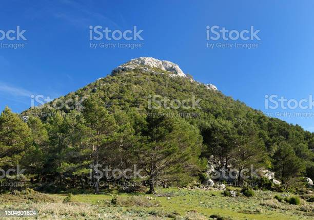 Photo of View To The Summit Of Mount L'Ofre And Green Pines Below On Balearic Island Mallorca