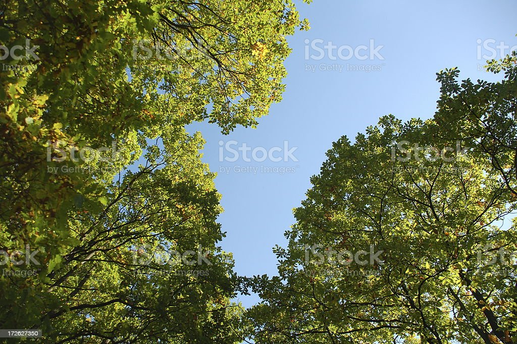 View to the tree tops royalty-free stock photo