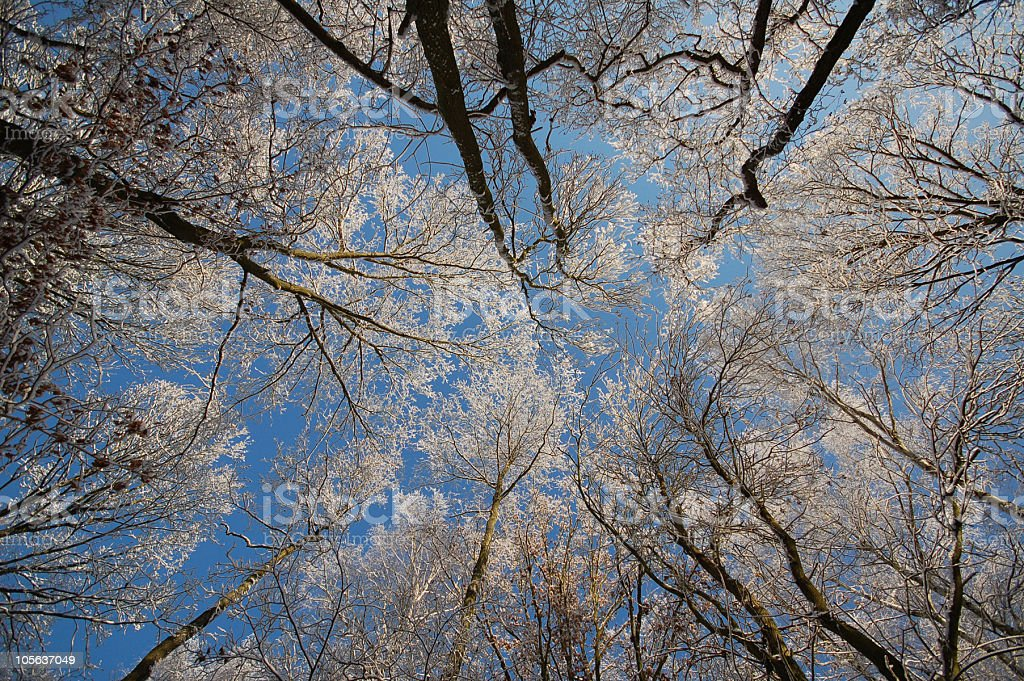 view to treetop in snowy forest royalty-free stock photo