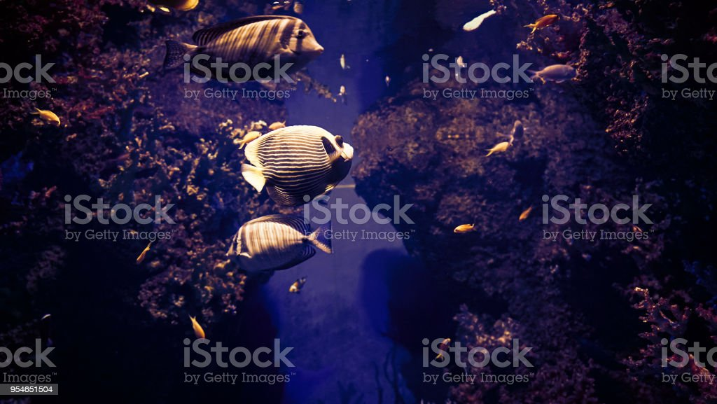 View under the water on colored sea fishes stock photo