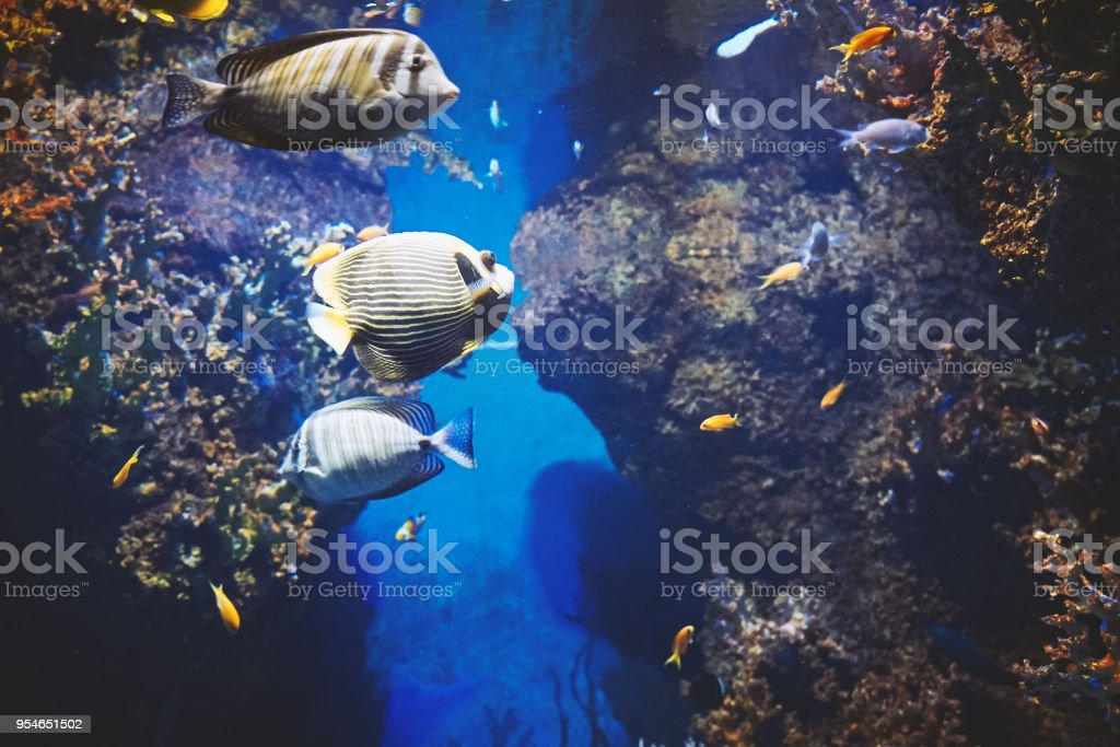 View under water of colored sea fishes stock photo
