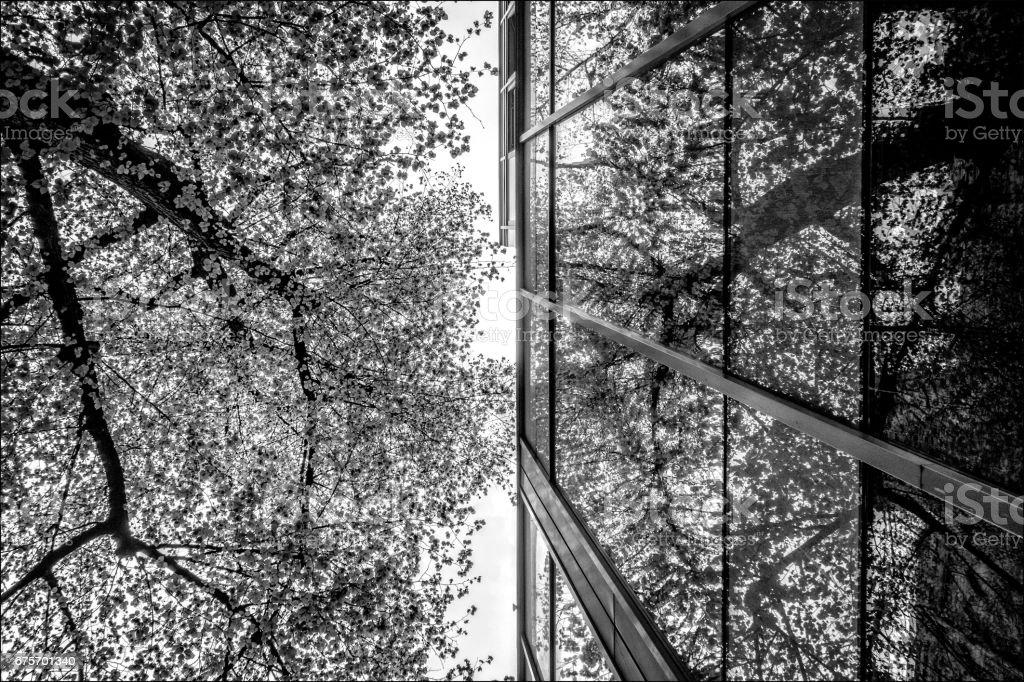 View up a tree and a reflection of the glass. royalty-free stock photo
